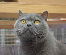 George  at The Cattery Company