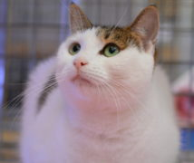 Xena  at The Cattery Company