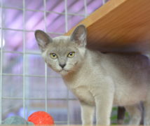 Theda  at The Cattery Company
