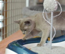 Playing  at The Cattery Company
