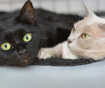 Milly & Fifi  at The Cattery Company