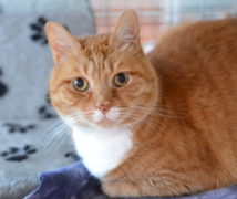 Dudley  at The Cattery Company