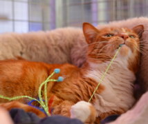 Jasper  at The Cattery Company