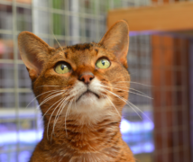 Jupiter Holmes  at The Cattery Company